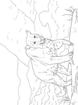 cougar-coloring-pages-8