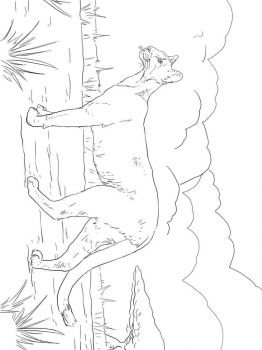 cougar-coloring-pages-9