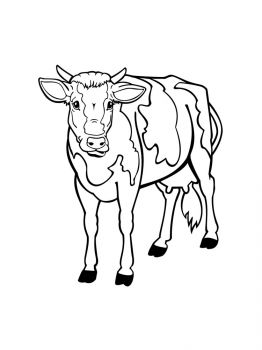 cow-coloring-pages-17