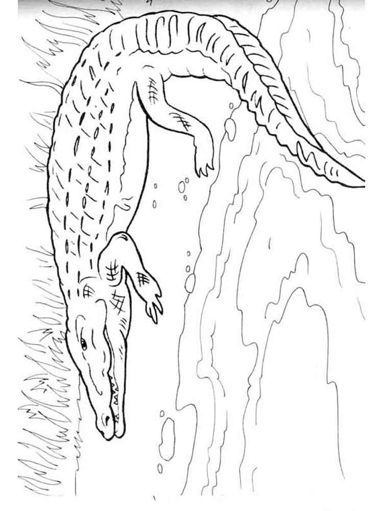 ausmalbilder krokodil  malvorlagen kostenlos zum ausdrucken