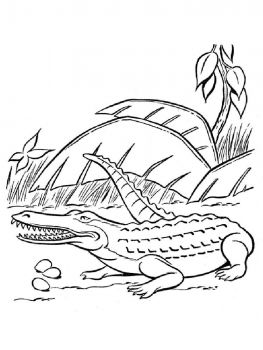 coloring-pages-animals-crocodile-7