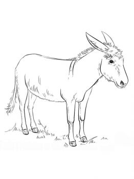 donkey-coloring-pages-4