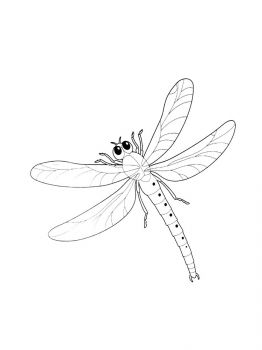 Dragonfly-coloring-pages-12