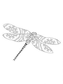 Dragonfly-coloring-pages-13
