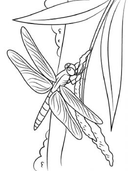 Dragonfly-coloring-pages-19