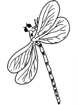 Dragonfly-coloring-pages-20