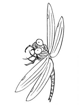 Dragonfly-coloring-pages-21