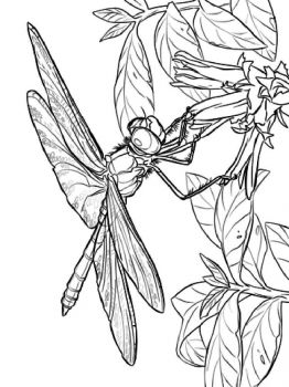 Dragonfly-coloring-pages-27