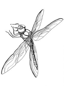 Dragonfly-coloring-pages-28