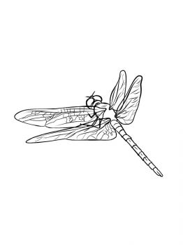 Dragonfly-coloring-pages-3