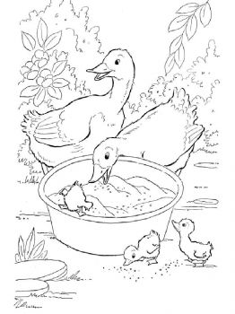 coloring-pages-animals-duck-1