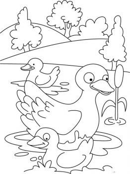 coloring-pages-animals-duck-3