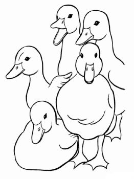 coloring-pages-animals-duck-6