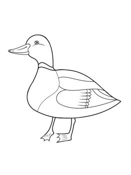 duck-coloring-pages-7
