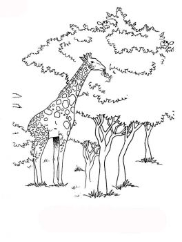 coloring-pages-animals-giraffe-9