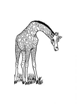 giraffe-coloring-pages-12