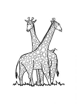 giraffe-coloring-pages-18