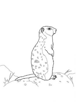 gopher-coloring-pages-3
