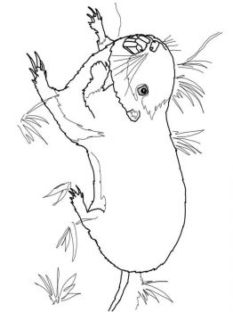 gopher-coloring-pages-7