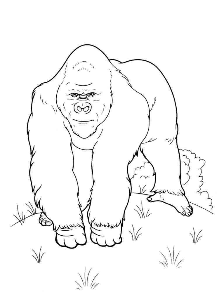 ausmalbilder gorillas  malvorlagen kostenlos zum ausdrucken