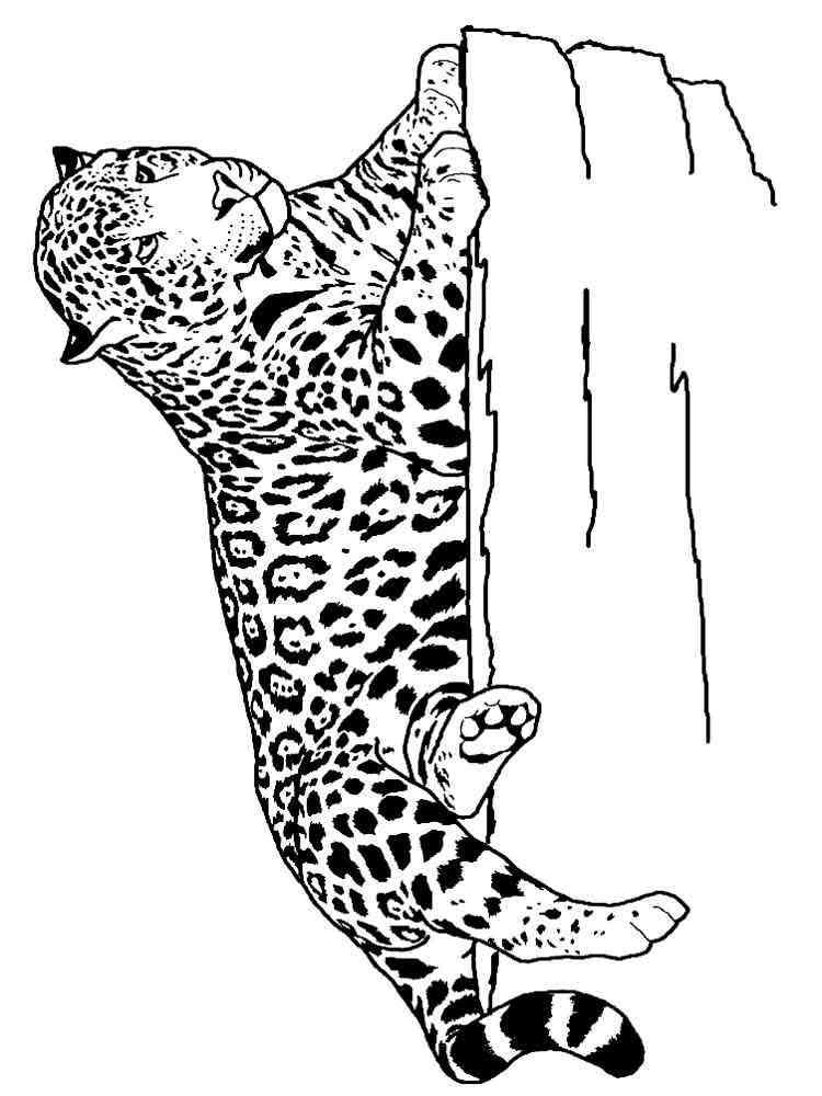 ausmalbilder jaguar  malvorlagen kostenlos zum ausdrucken