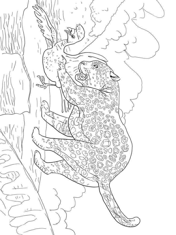 ausmalbilder jaguar - malvorlagen kostenlos zum ausdrucken