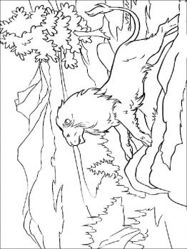 coloring-pages-animals-lion-14