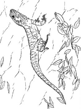 lizard-coloring-pages-2