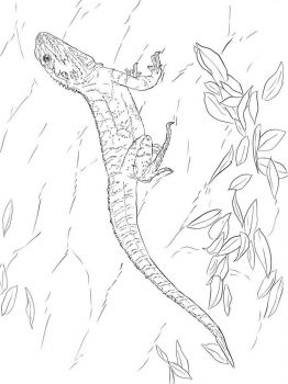 lizard-coloring-pages-4