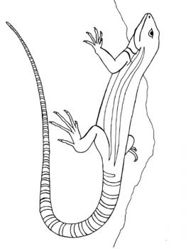lizard-coloring-pages-9