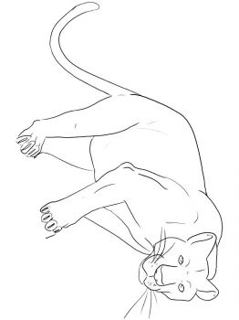 panther-coloring-pages-7