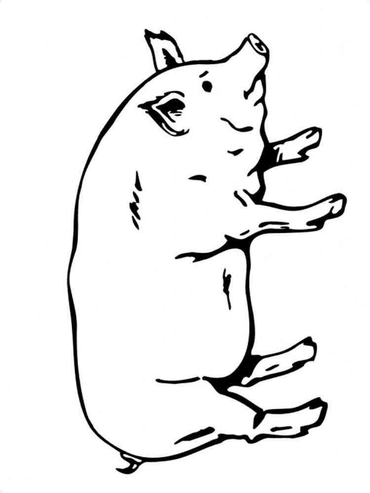 ausmalbilder schwein - malvorlagen kostenlos zum ausdrucken