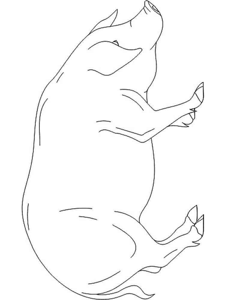 ausmalbilder schwein  malvorlagen kostenlos zum ausdrucken