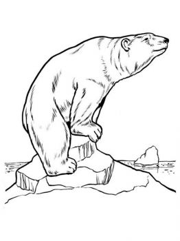 polar-bear-coloring-pages-2