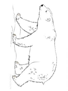 polar-bear-coloring-pages-9