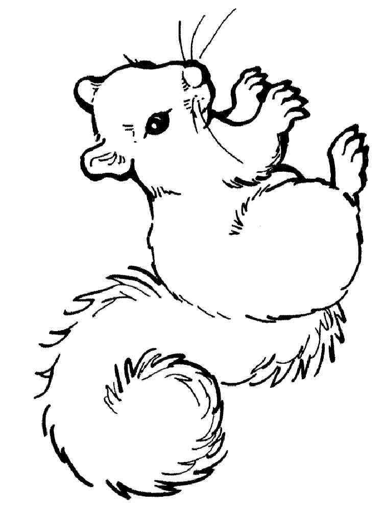 ausmalbilder eichhörnchen - malvorlagen kostenlos zum