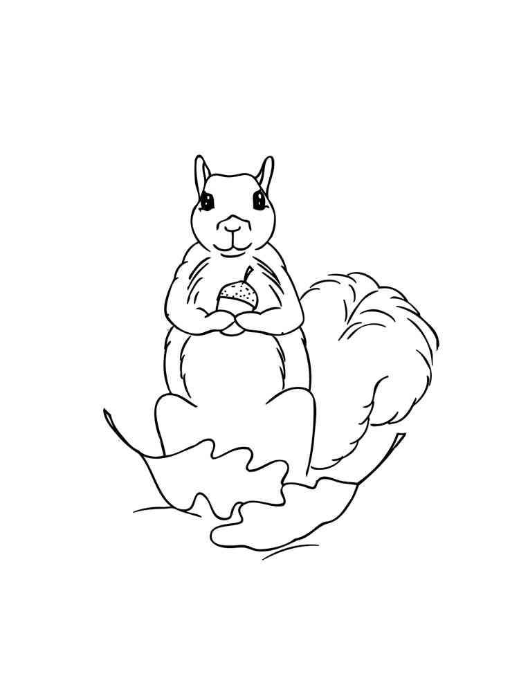 ausmalbilder eichhörnchen  malvorlagen kostenlos zum