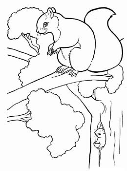 coloring-pages-animals-squirrel-1