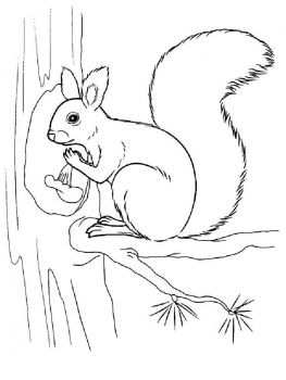 coloring-pages-animals-squirrel-3