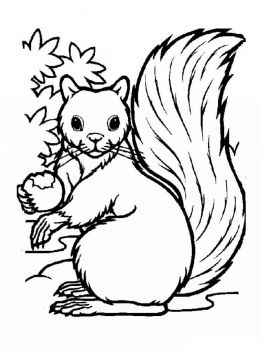 coloring-pages-animals-squirrel-7