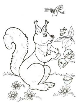 coloring-pages-animals-squirrel-8