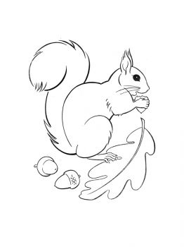 squirrel-coloring-pages-35