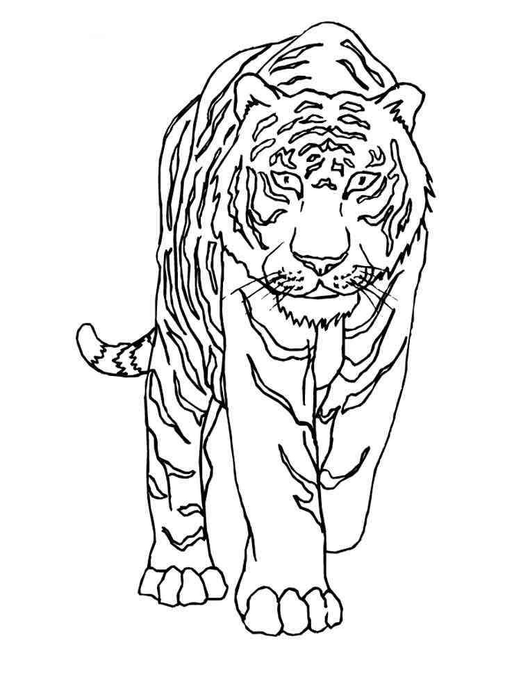ausmalbilder tiger  malvorlagen kostenlos zum ausdrucken