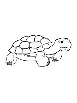 turtle-coloring-pages-16