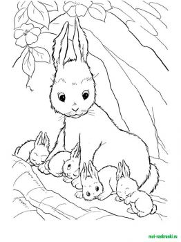 wild-animal-coloring-pages-13