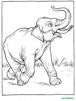 wild-animal-coloring-pages-3