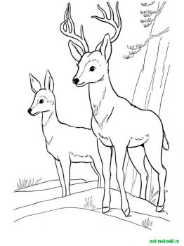 wild-animal-coloring-pages-33