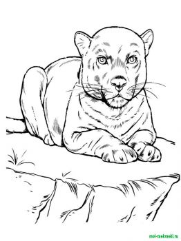 wild-animal-coloring-pages-37
