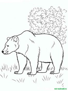wild-animal-coloring-pages-39