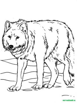wild-animal-coloring-pages-4